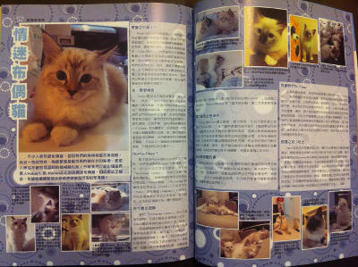 Rockarags Cattery in March 2012 issue of Cat's Life Magazine